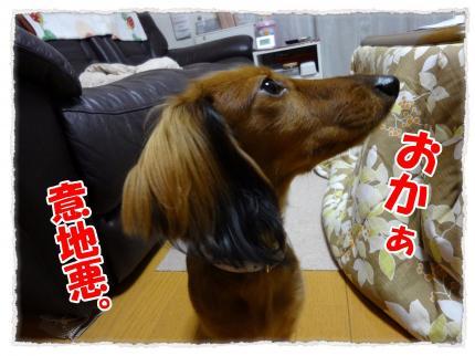 2011_12_5_10_convert_20111205231020.jpg
