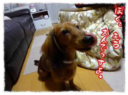 2011_12_5_9_convert_20111205230954.jpg