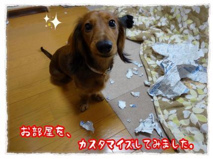 2011_12_9_2_convert_20111209231234.jpg