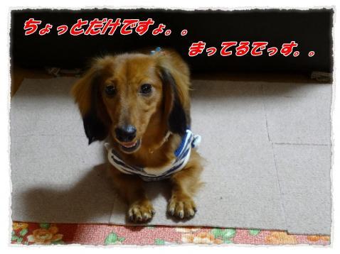 2011_9_26_2_convert_20110926185614.jpg