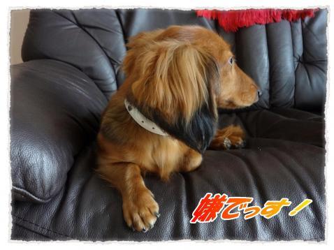 2011_9_28_2_convert_20110928171626.jpg