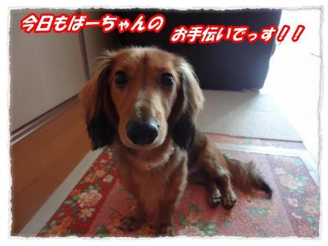 2011_9_28_convert_20110928171603.jpg