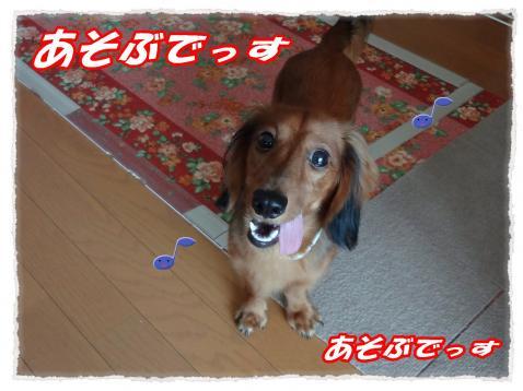 2011_9_29_2_convert_20110929222130.jpg