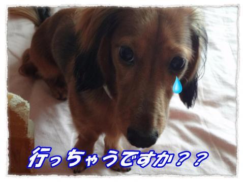 2011_9_29_5_convert_20110929222243.jpg