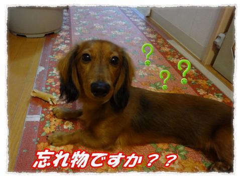 2011_9_29_7_convert_20110929222328.jpg