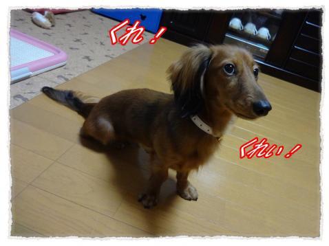 2011_9_30_1_convert_20110930164947.jpg