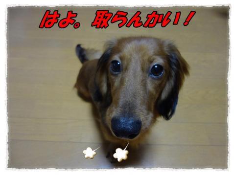 2011_9_30_3_convert_20110930165042.jpg