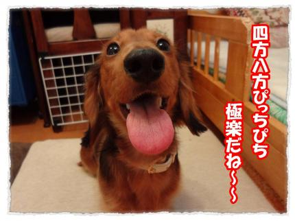 2012_1_26_4+-+繧ウ繝斐・_convert_20120126222211