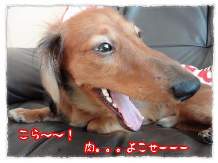 2012_1_12_3_convert_20120112223151.jpg