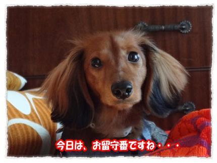 2012_1_12_4_convert_20120112223207.jpg