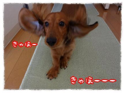 2012_1_12_5_convert_20120112223226.jpg