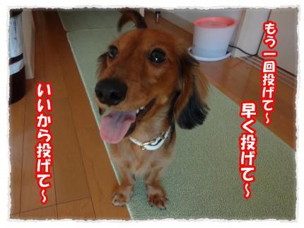 2012_1_12_6_convert_20120112223248.jpg