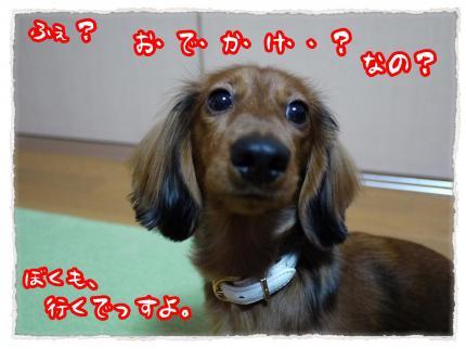 2012_1_13_1_convert_20120113204333.jpg