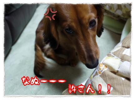2012_1_13_2_convert_20120113204359.jpg