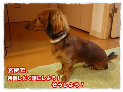 2012_1_13_3_convert_20120113204416.jpg