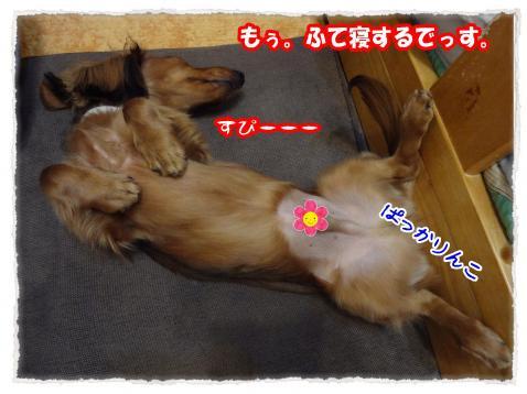 2012_1_13_4_convert_20120113204445.jpg