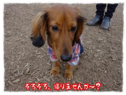 2012_1_15_7_convert_20120115222958.jpg