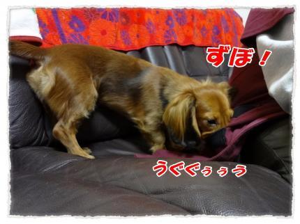 2012_1_16_2_convert_20120116225810.jpg