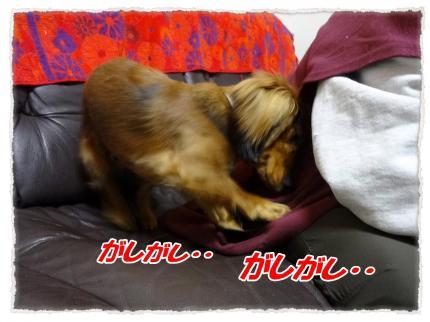 2012_1_16_4_convert_20120116225912.jpg