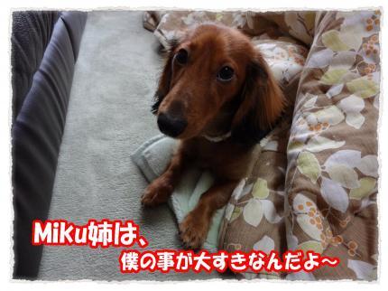 2012_1_18_3_convert_20120118224842.jpg
