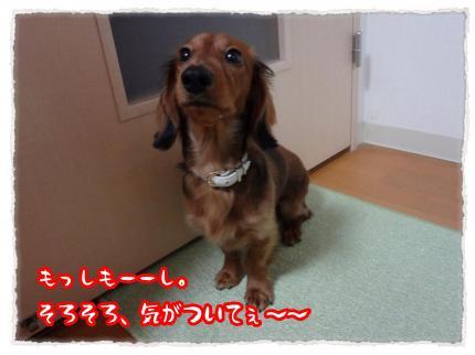 2012_1_19_3_convert_20120119232636.jpg