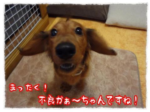 2012_1_20_1_convert_20120119235458.jpg