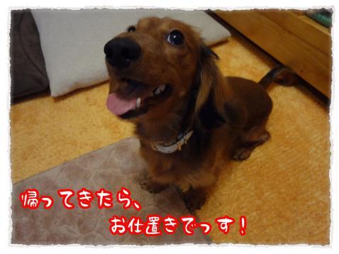 2012_1_20_2_convert_20120119235519.jpg