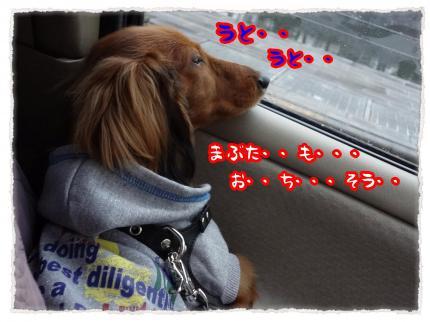 2012_1_21_6_convert_20120121233026.jpg