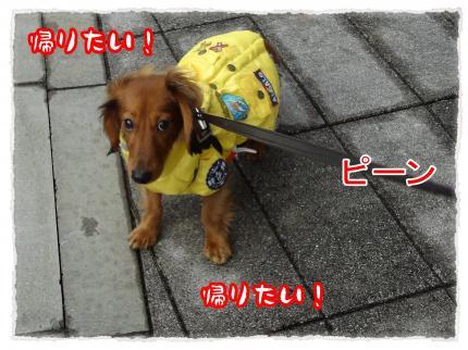 2012_1_22_2_convert_20120122222216.jpg