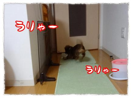 2012_1_30_2_convert_20120130224229.jpg