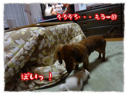 2012_1_30_4_convert_20120130224303.jpg