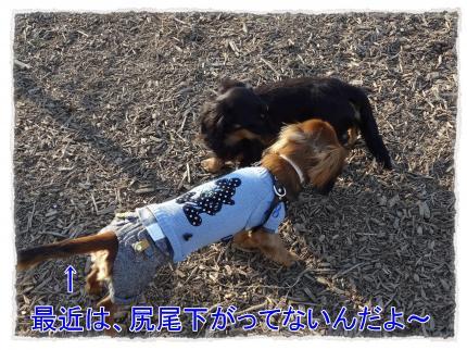 2012_1_7_3_convert_20120107223703.jpg