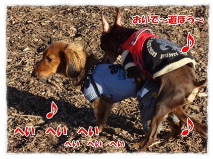 2012_1_7_5_convert_20120107223835.jpg