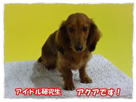 2012_1_8_7_convert_20120108225226.jpg