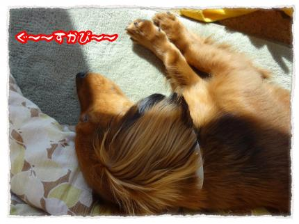 2012_1_9_4_convert_20120109232353.jpg