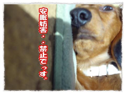 2012_1_9_5_convert_20120109232413.jpg