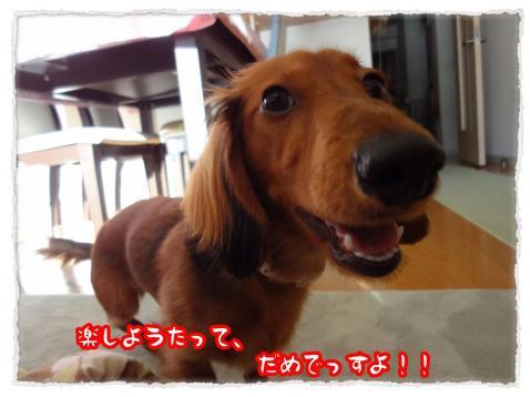 2012_1_9_6_convert_20120109232433.jpg