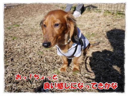 2012_2_12_3_convert_20120221225730.jpg