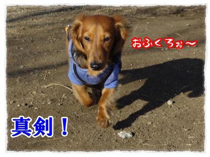 2012_2_13_2_convert_20120213232241.jpg