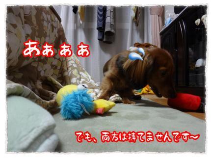 2012_2_14_4_convert_20120214232839.jpg