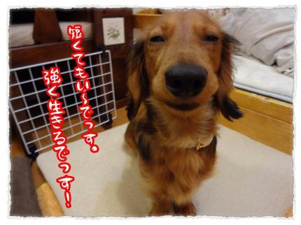 2012_2_16_5_convert_20120216231521.jpg