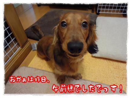 2012_2_18_1_convert_20120218232300.jpg
