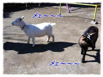 2012_2_18_7_convert_20120218232513.jpg