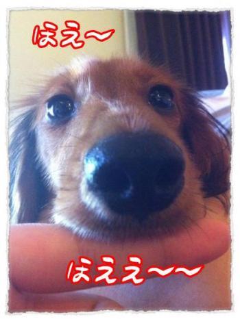 2012_2_20_3_convert_20120220233845_convert_20120220234235.jpg