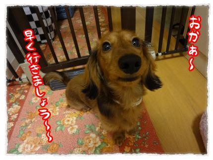 2012_2_20_5_convert_20120220233919.jpg