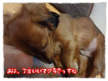 2012_2_23_2_convert_20120223220443.jpg