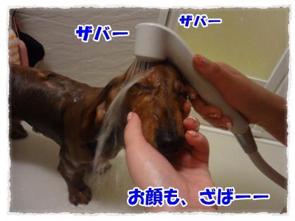 2012_2_25_6_convert_20120225225224.jpg