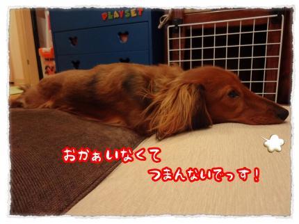 2012_2_26_1_convert_20120226230454.jpg