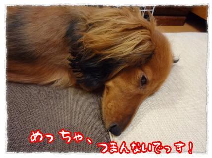 2012_2_26_2_convert_20120226230523.jpg