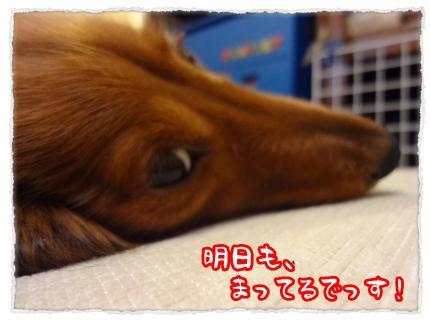 2012_2_26_4_convert_20120226230556.jpg